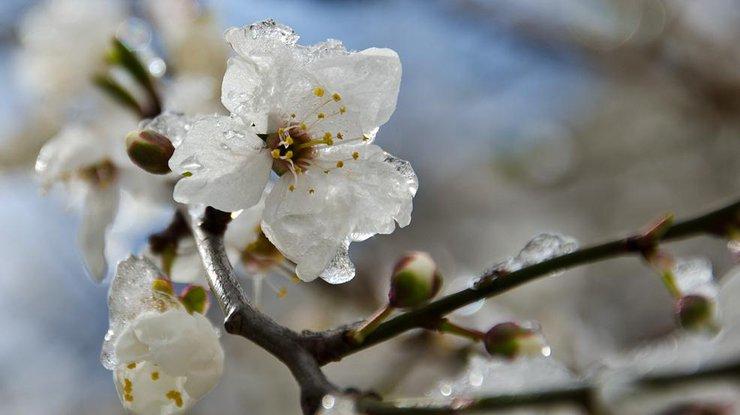 Синоптики дали прогноз, когда в Украине наконец потеплеет