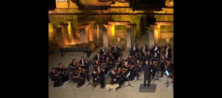 Собака пришедшая на выступление оркестра покорила facebook (ВИДЕО)