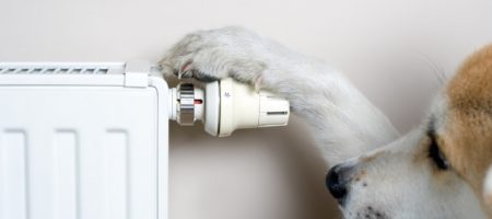 Household concept with dog adjusting comfort temperature on radiator. The dog is Japanese Akita Inu.