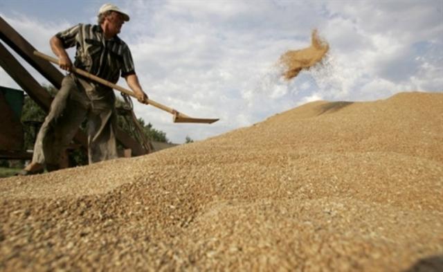 Эксперты оценили зерновой рынок Украины, 40% которого в тени