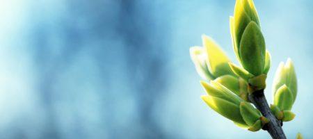 WELCOME весна: синоптик рассказала, где и когда потеплеет до +17