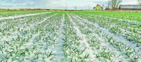 Земельная реформа в Украине: земли начали передавать в собственность громадам