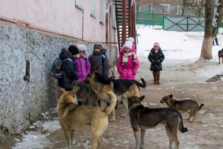 УЖАС на Одесщине! Стая злых псов разорвала 6-летнюю школьницу - жуткие подробности