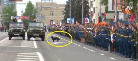 """""""Собака лает на исчадие ада!"""" На параде в оккупированном Донецке служивые отдавали честь не Захарченку а собаке (РАЗРЫВ СЕТИ ВИДЕО)"""