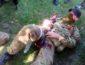 """В """"ДНР"""" подтвердили тяжелые потери в результате боев с ВСУ: морги Горловки переполнены - подробности от врачей"""