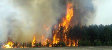 ВНИМАНИЕ! В Чернобыле возле самого опасного участка вспыхнул большой пожар