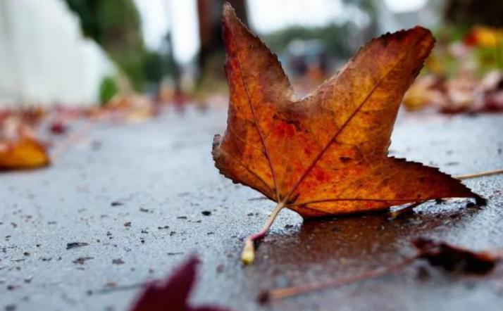 Когда в Украину придет похолодание с дождями: синоптик назвала дату