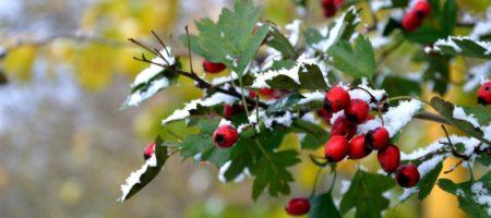 Синоптики рассказали какой будет зима и когда ждать первого снега