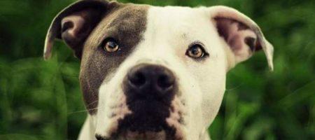 Одесский суд вынес приговор мужчине к трем годам лишения свободы за кражу собаки