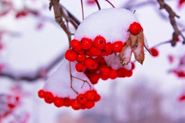 Синоптики спрогнозировали похолодание в Украине (КАРТА)