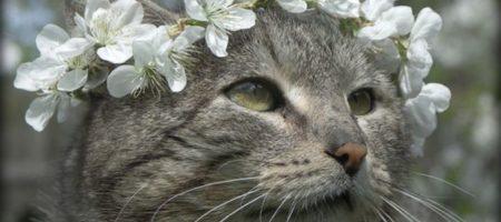 Неожиданная шокирующая весна до +14. Синоптики ошарашили некоторые регионы Украины