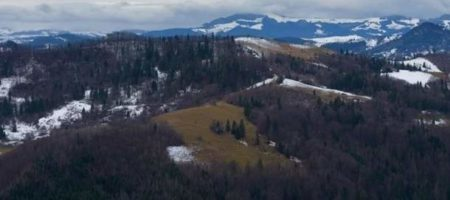 Запасы Украинского леса на шестом по запасам древесины в Европе