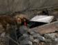 Служебный пес в Днепре за 10 минут нашел женщину, которую искали трое суток (СЮЖЕТ)