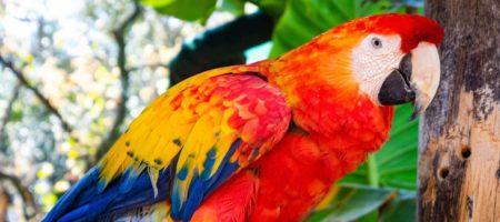 В Бразилии арестовали попугая за помощь местным наркоторговцам