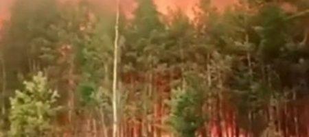 Украинские спасатели пытаются не пустить лестной пожар, который идет на Украину с Беларусии (СЮЖЕТ)