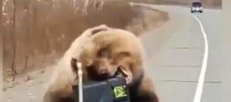 Медведь обворовал охотников, утащив у них еду (ВИДЕО)