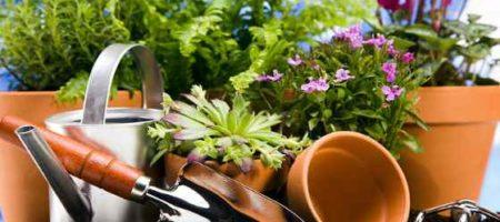 Питание комнатных растений