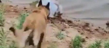 """Интернет покоряет собака, ставшая """"телохранителем"""" для маленькой девочки"""
