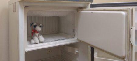 Американец был шокирован находкой в холодильнике погибшей матери (ВИДЕО)