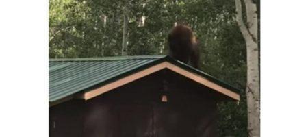 Медведь в США украл кормушку для птиц со двора (ВИДЕО)