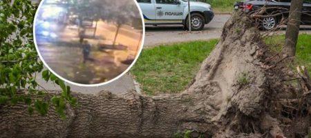 Штормовое предупреждение!В Киеве мужчина чудом увернулся от падающего дерева. Видео