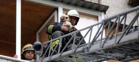 В результате пожара квартиры на столичной Оболони пожарные спасли собаку