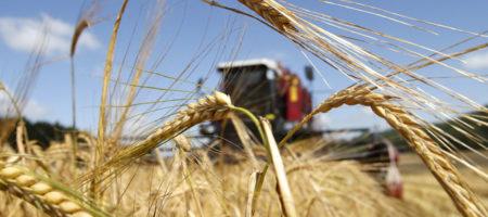Урожай зерновых украинских аграриев в этом году может превысить 71 миллион тонн