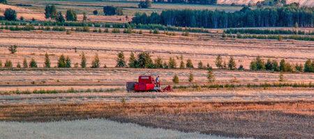 Из-за засухи урожайность яровых культур на Юге Украины снизилась на 20%