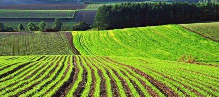 Украинцам начнут массово раздавать землю, стало известно сколько получит каждый