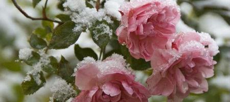В Украине ударят морозы: синоптики удивили невероятной новостью