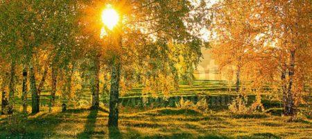 Осень еще может удивлять: синоптики порадовали прогнозом на неделю