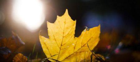 """""""Неправильный"""" ноябрь: синоптики прогнозируют до +22"""