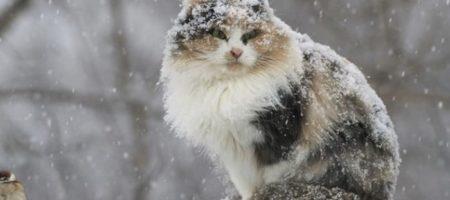 «Шашлычные» выходные. В Украину опять придет потепление, но снег уже близко