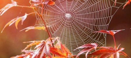Праздники и приметы 11 ноября: что нельзя делать в этот день