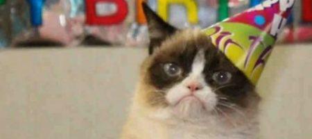 Как правильно рассчитать возраст кошки в переводе на человеческие годы