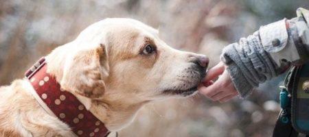 Как перевести в человеческий возраст собаки: новая формула от ученых