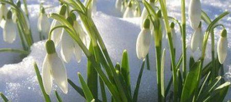 Снег и морозы до самого мая: появился прогноз на весну в Украине