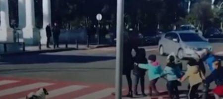 Хит Сети: собака, помогающая детям переходить дорогу. ВИДЕО