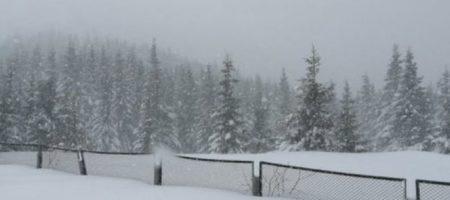 Страшная зимняя сказка: в Карпатах творится невообразимое. ФОТО