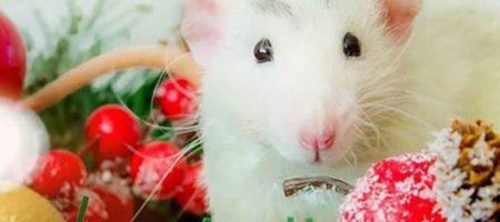 5 настоящих любимчиков Металлической Крысы по знаку Зодиака 2020 года