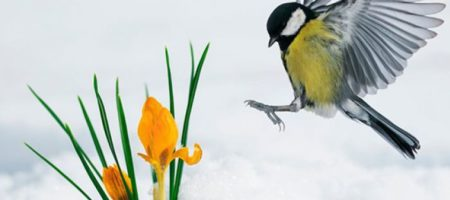 В Украину идет весна: прогноз синоптиков и КАРТА по регионам