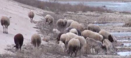 Крымская земля засохнет до лета