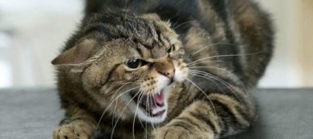 В Харькове кот парализовал целый район