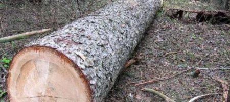 На Тернопольщине срезанное дерево насмерть привалило обидчика