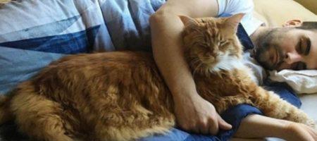 Семь причин разрешить кошке спать вместе с вами