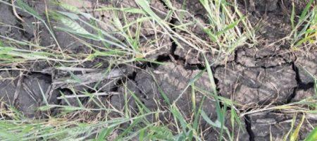 Засуха уничтожила в Украине 230 тысяч га посевов