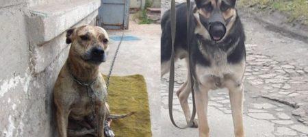 Экс-нардеп жестко раскритиковал решение Минюста о продаже собак