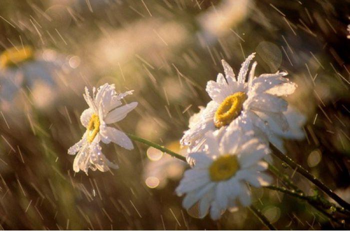 Дожди, грозы и температура от +6 до +27: прогноз погоды на неделю