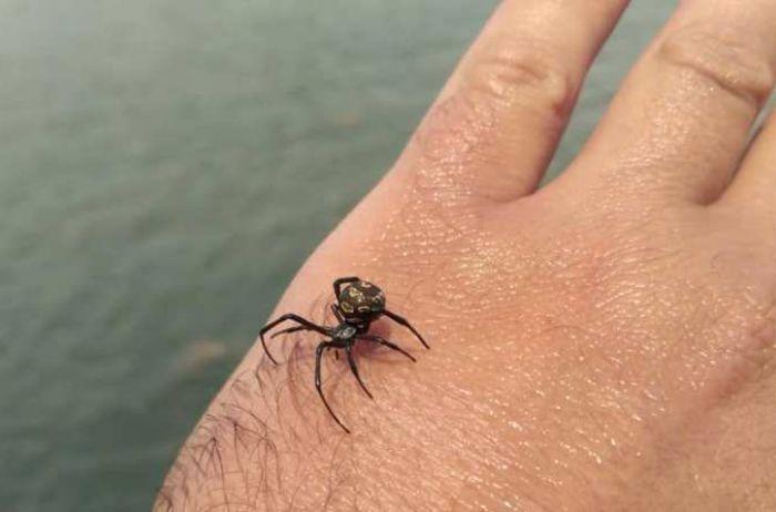 Смертельно опасный паук укусил женщину на популярном украинском курорте