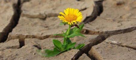Вирусы не смогут перемерзнуть: чем грозят украинцам изменения климата